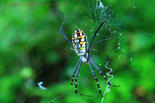 depth spider